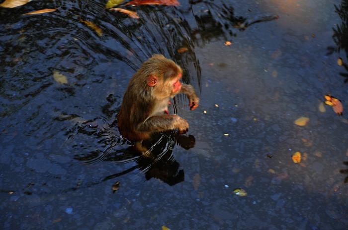 water-monkey_zpswgfs3tkr